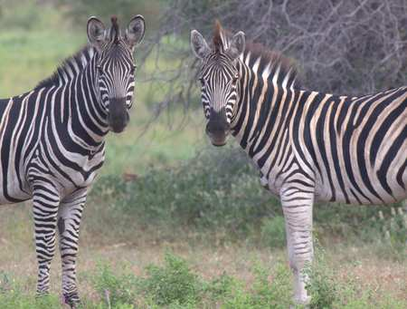 Botswana field trip _3159.jpg