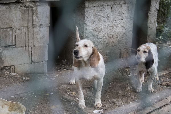 Working with a Spanish charity to document the appalling conditions suffered by hunting dogs in the Pyrenees mountains