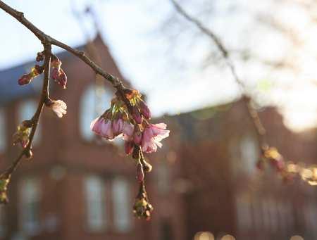 Glyntaff Campus Blossom