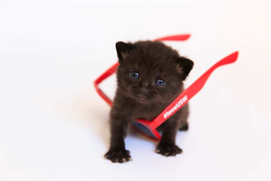 Kittens campaign_18852.jpg