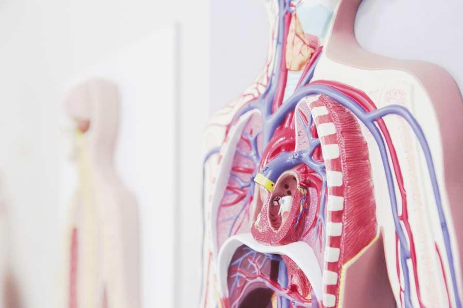 Medical Sciences human body