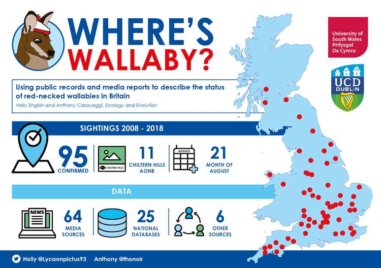 Wallaby infographic
