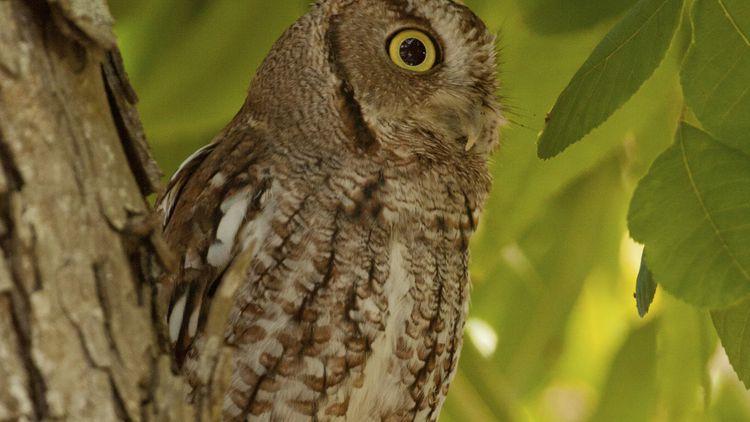 Owl Wildlife Crime